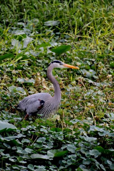 Florida's bird