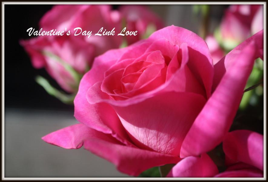 Valentine's Day Link Love